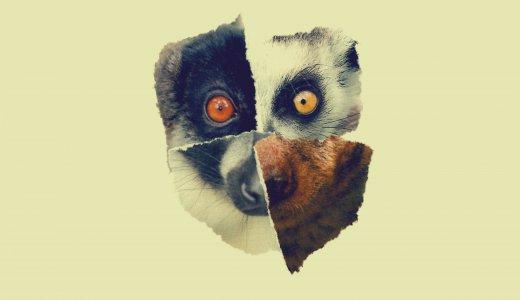 161016_Lemur_Tiere_PROMO_RZ.indd